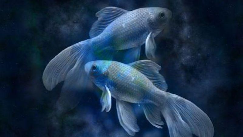 Balık burcu günlük burç yorumları